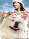 秋田犬蓬夫