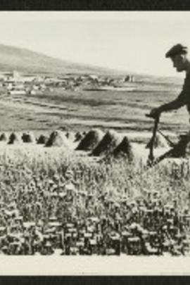 设得兰群岛的经历( 1977 )