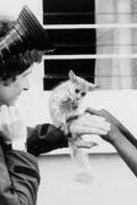 越行越远( 1979 )