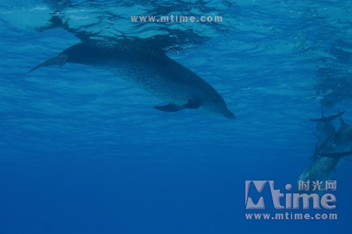 一万米深海动物