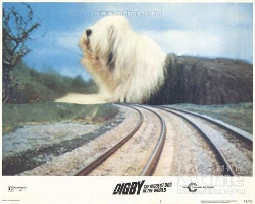 世界上最大的狗digby