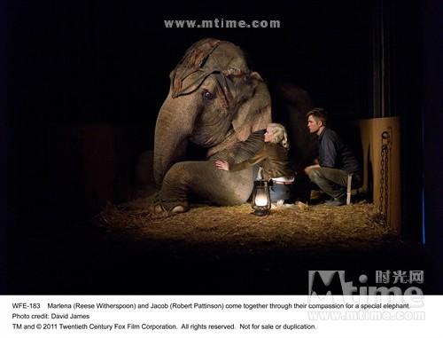 大象的眼泪