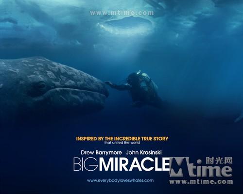 巨大奇迹Big Miracle(2012)海报 #04A