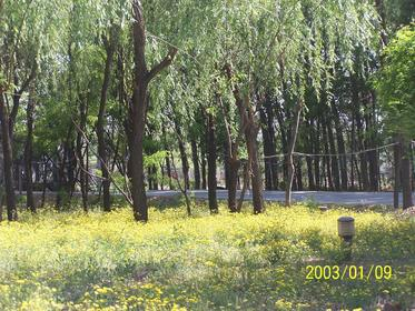 枫花园春天